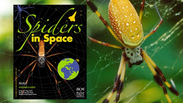 Spiders in Space